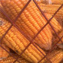 厂家直销河南圈玉米钢板网