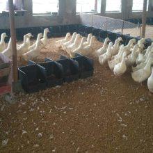 鸭蛋窝 生产厂家 种鸭产蛋窝 塑料鸭蛋窝