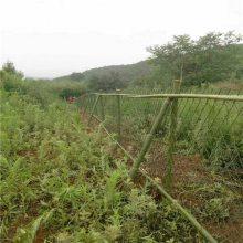圈地专用钢板网 养殖钢板网 绿色环保菱形拉伸网