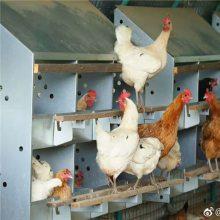 双层产蛋箱 散养土鸡产蛋箱 福德中兴产蛋箱使用方法