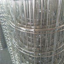 镀锌电焊网 安平电焊网片 抹墙电焊网最低报价
