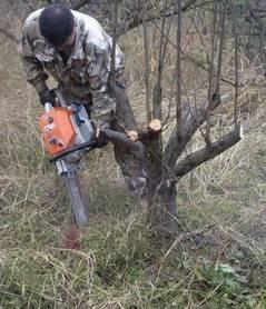 【碎树机】碎树机价格_碎树机价格_碎树公司河北视频会议图片